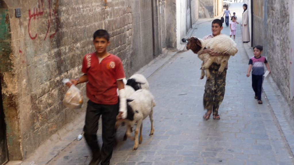 Kids, sheep and I share the street
