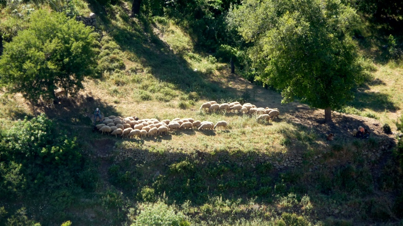 A flock of sheep--view from the Crak